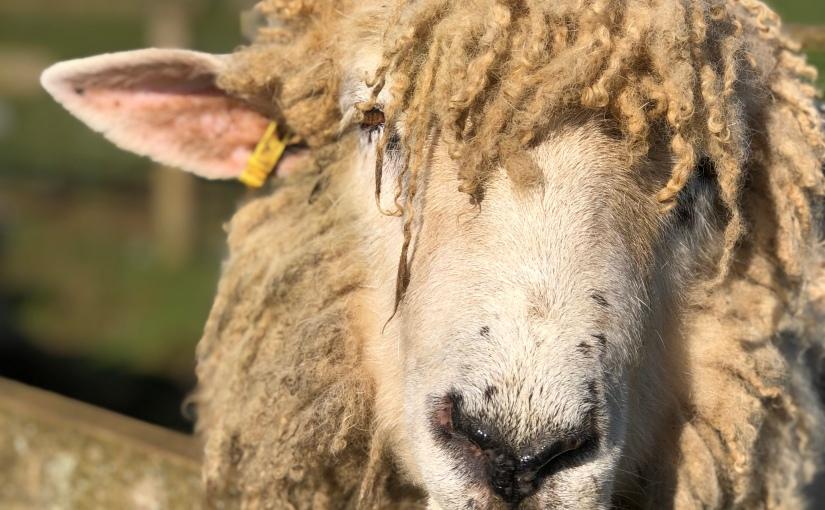 AD| Why I'll always love Cotswold FarmPark